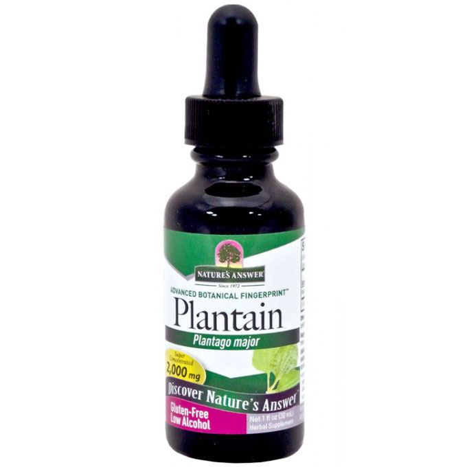 Plantain Leaf Extract Liquid 1 oz from Natures Answer